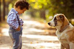 Боязнь животных: особенности фобии и ее лечение